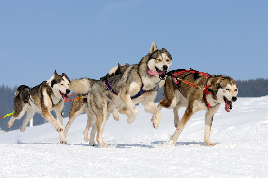 Vermont Dog Sledding Tour